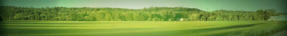Turfgrass Sod