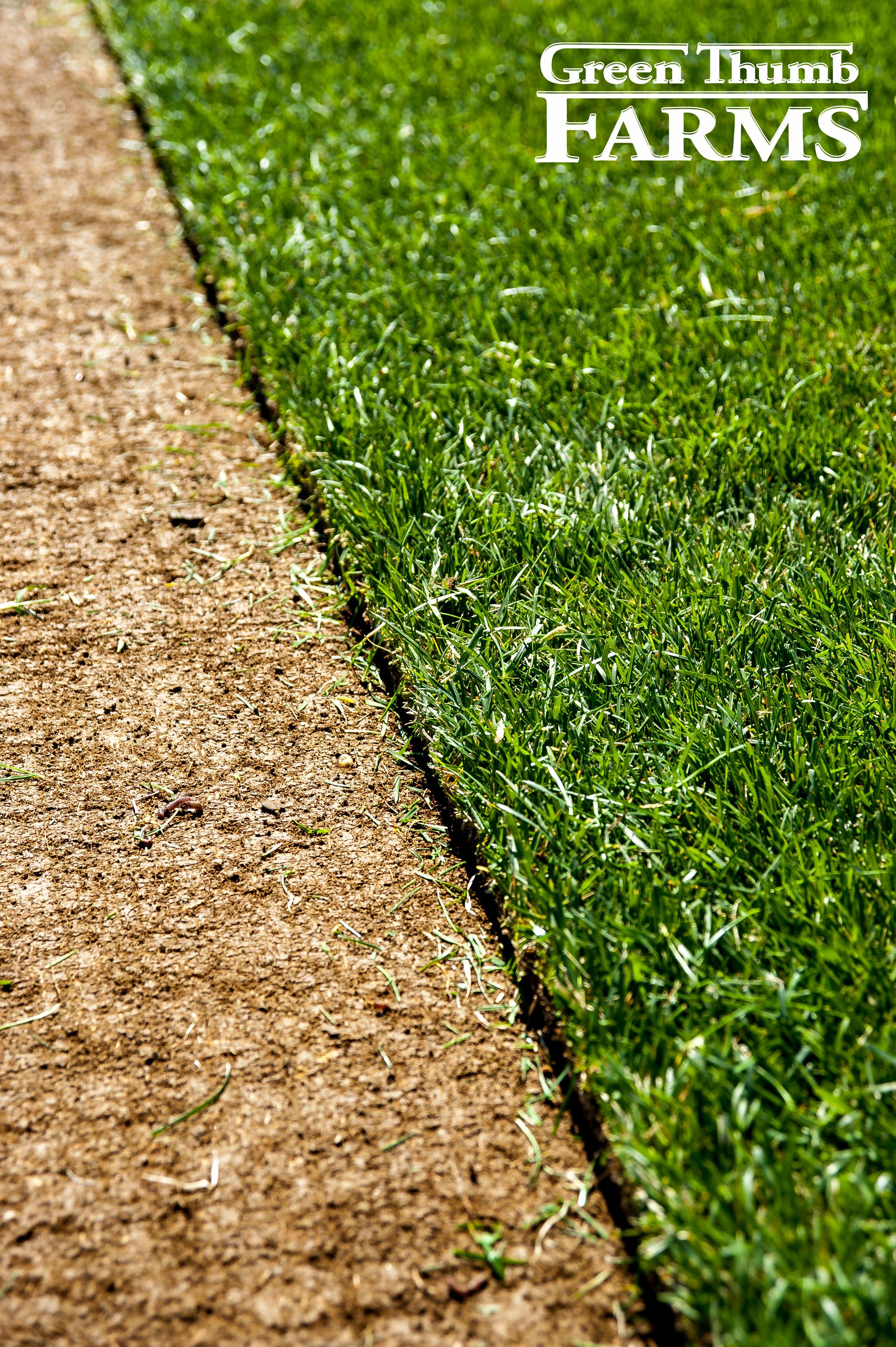 April Showers Bring May Turf Grass Green Thumb Farms